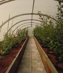Mallas de protección agrícola